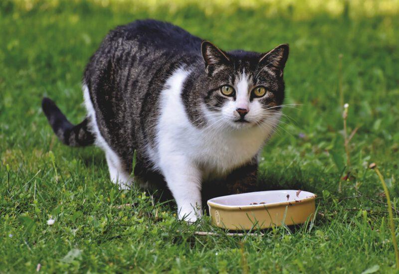 Jak wybrać dobrą karmę dla kota?